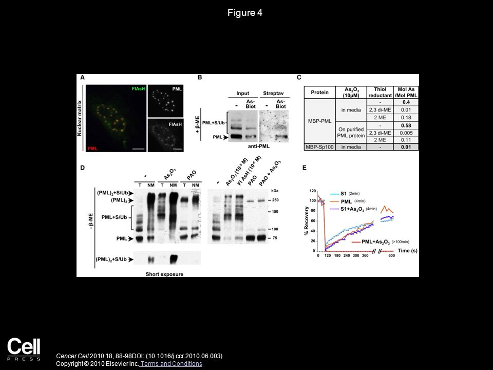Figure 4 Cancer Cell 2010 18, 88-98DOI: (10.1016/j.ccr.2010.06.003) Copyright © 2010 Elsevier Inc.
