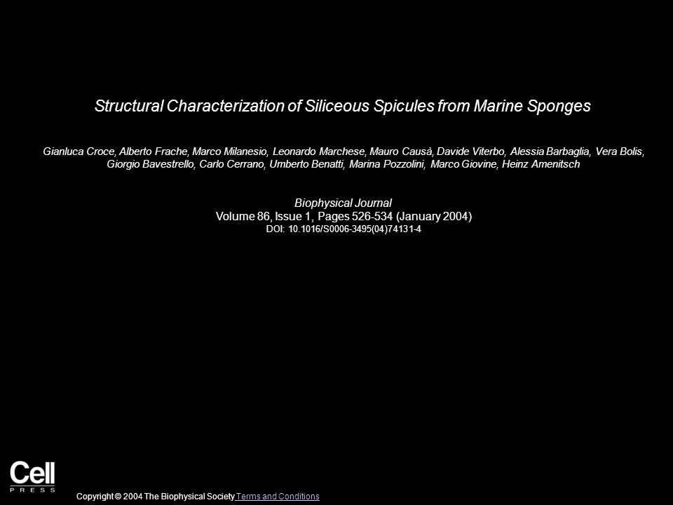 Structural Characterization of Siliceous Spicules from Marine Sponges Gianluca Croce, Alberto Frache, Marco Milanesio, Leonardo Marchese, Mauro Causà, Davide Viterbo, Alessia Barbaglia, Vera Bolis, Giorgio Bavestrello, Carlo Cerrano, Umberto Benatti, Marina Pozzolini, Marco Giovine, Heinz Amenitsch Biophysical Journal Volume 86, Issue 1, Pages 526-534 (January 2004) DOI: 10.1016/S0006-3495(04)74131-4 Copyright © 2004 The Biophysical Society Terms and Conditions Terms and Conditions