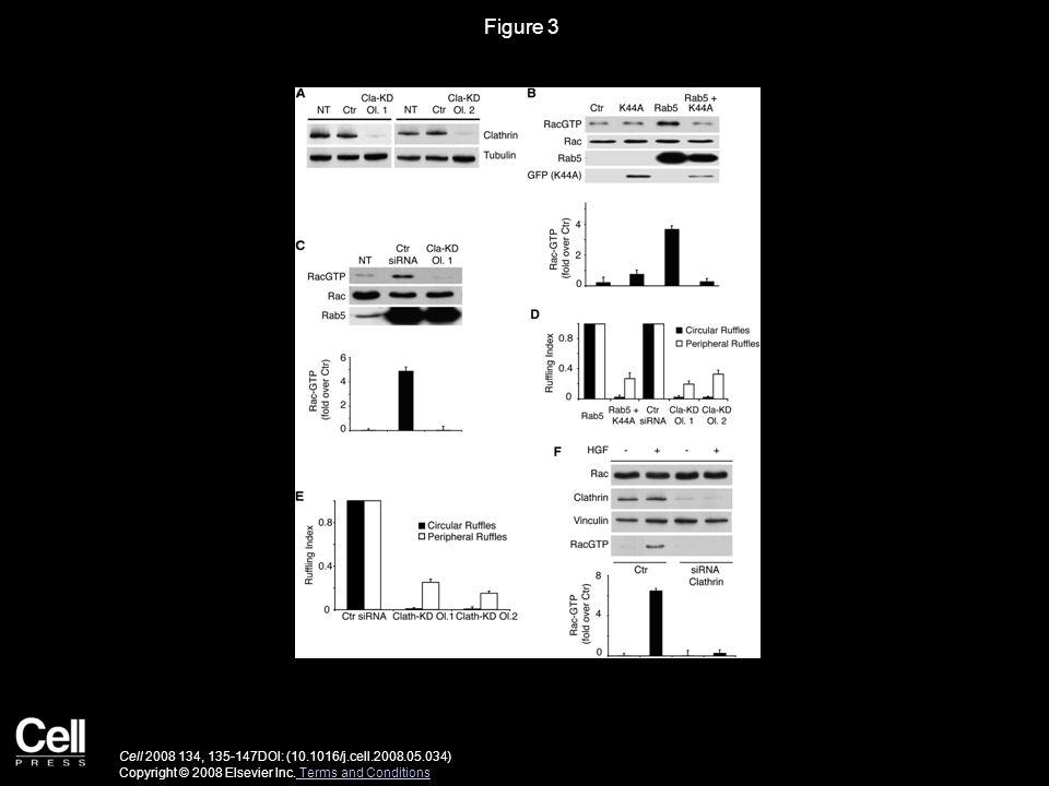 Figure 3 Cell 2008 134, 135-147DOI: (10.1016/j.cell.2008.05.034) Copyright © 2008 Elsevier Inc.
