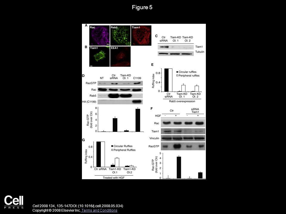 Figure 5 Cell 2008 134, 135-147DOI: (10.1016/j.cell.2008.05.034) Copyright © 2008 Elsevier Inc.