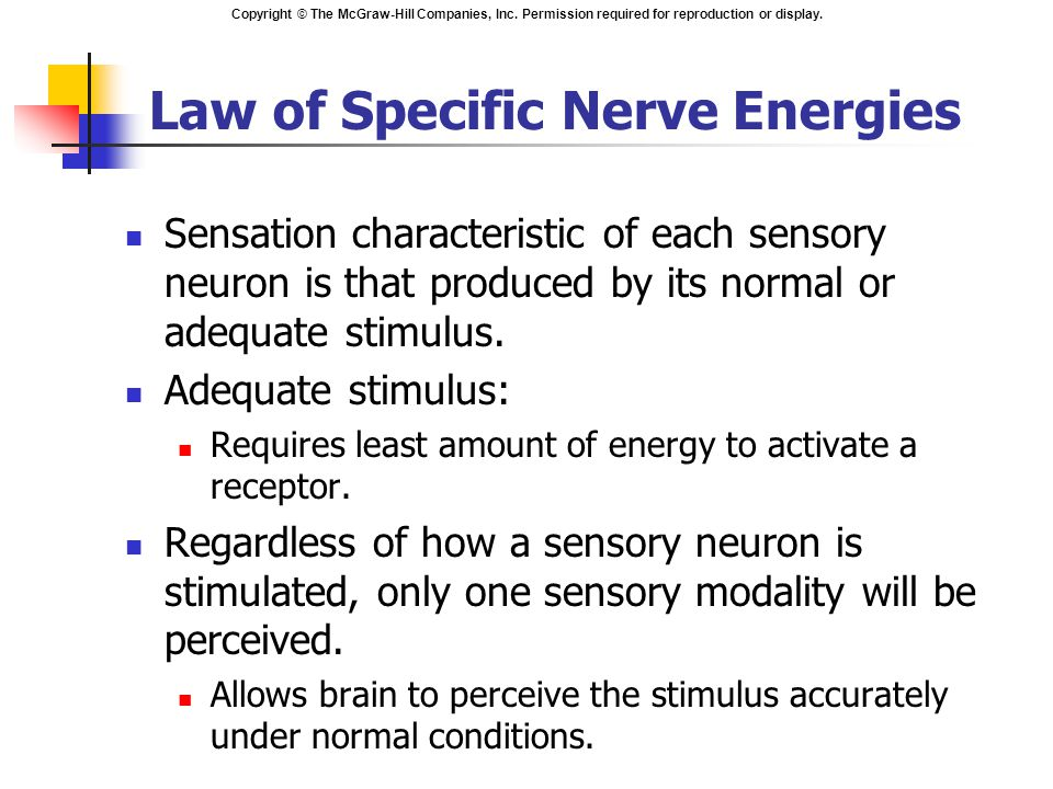 Copyright © The McGraw-Hill Companies, Inc. Permission required for reproduction or display. Law of Specific Nerve Energies Sensation characteristic o