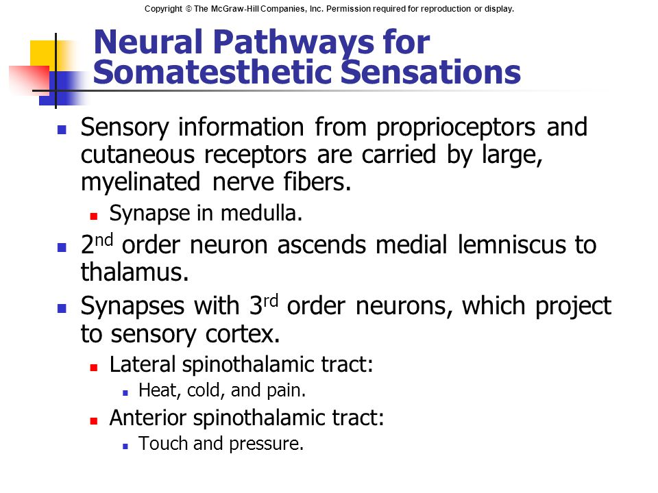 Copyright © The McGraw-Hill Companies, Inc. Permission required for reproduction or display. Neural Pathways for Somatesthetic Sensations Sensory info