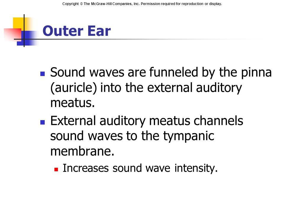 Copyright © The McGraw-Hill Companies, Inc. Permission required for reproduction or display. Outer Ear Sound waves are funneled by the pinna (auricle)