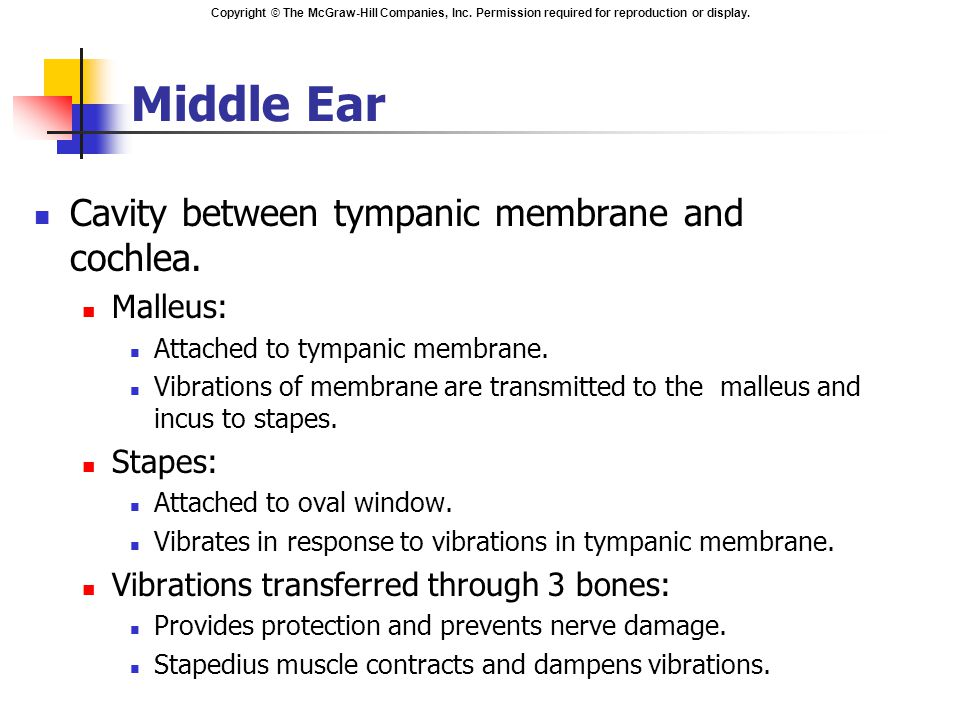 Copyright © The McGraw-Hill Companies, Inc. Permission required for reproduction or display. Middle Ear Cavity between tympanic membrane and cochlea.