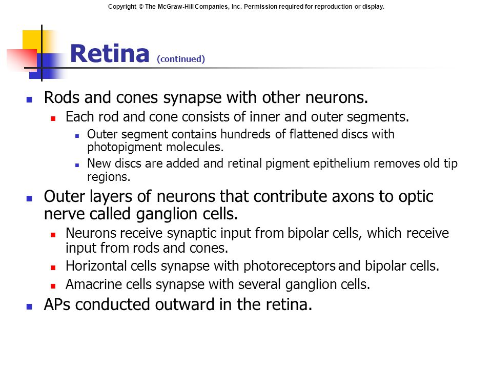 Copyright © The McGraw-Hill Companies, Inc. Permission required for reproduction or display. Retina (continued) Rods and cones synapse with other neur