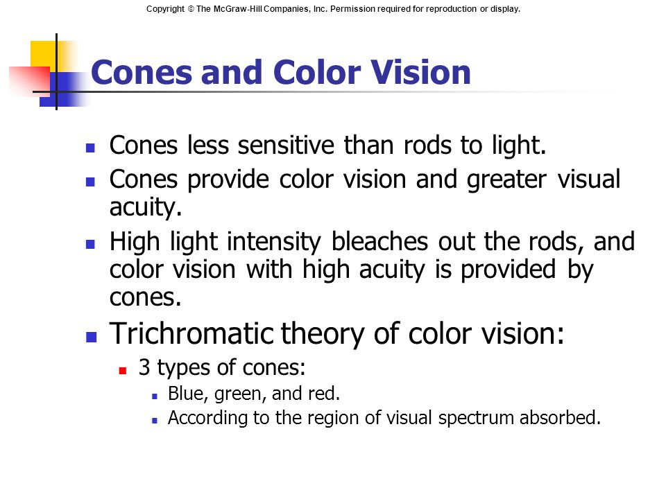 Copyright © The McGraw-Hill Companies, Inc. Permission required for reproduction or display. Cones and Color Vision Cones less sensitive than rods to