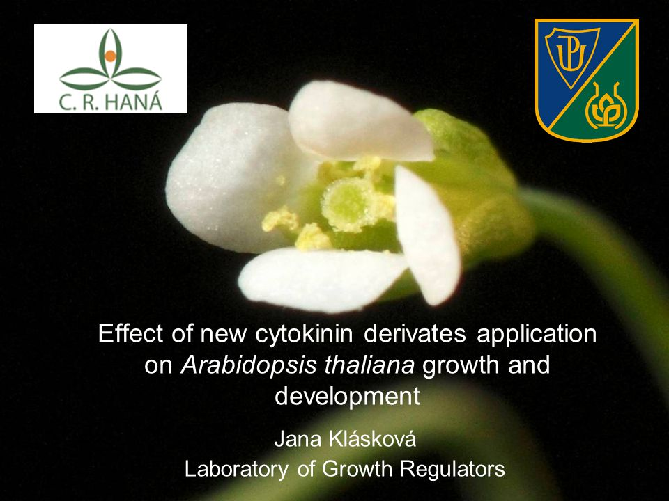 Effect of new cytokinin derivates application on Arabidopsis thaliana growth and development Jana Klásková Laboratory of Growth Regulators
