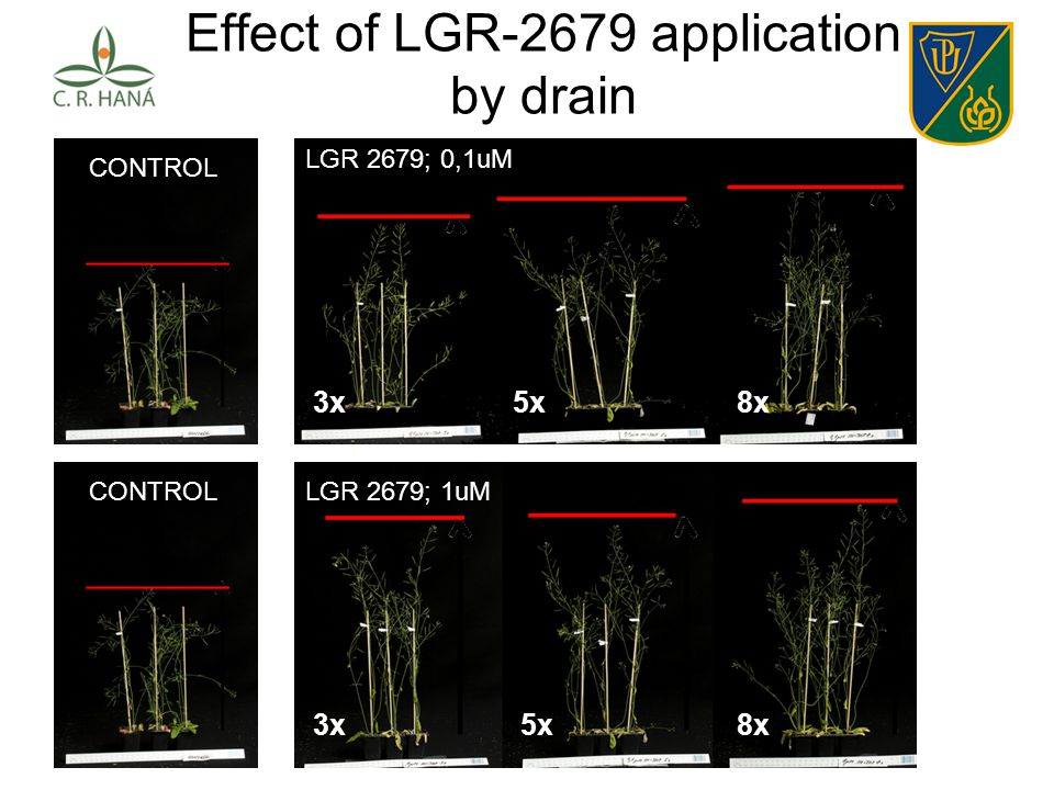Effect of LGR-2679 application by drain 0,1uM X 3x 0,1uM X 5x 0,1uM X 8x 0,1uM X 3x 0,1uM X 5x 0,1uM X 8x CONTROL 0,1uM X 3x 0,1uM X 5x 0,1uM X 8x 1uM X 3x 1uM X 5x 1uM X 8x CONTROL LGR 2679; 0,1uM LGR 2679; 1uM 3x5x8x 3x5x8x