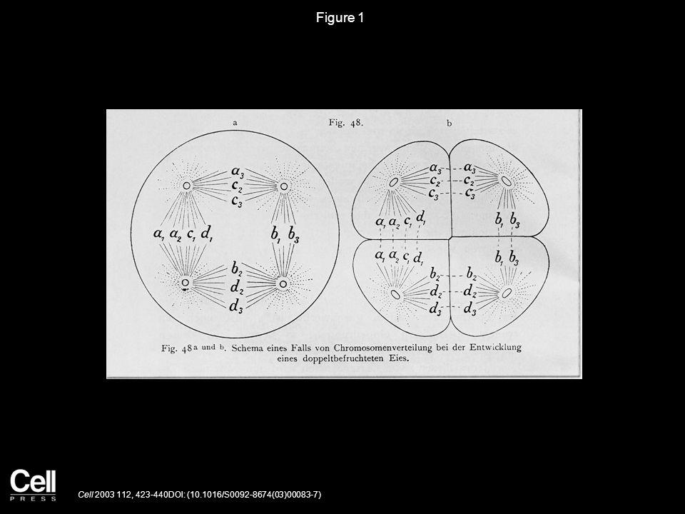 Figure 1 Cell 2003 112, 423-440DOI: (10.1016/S0092-8674(03)00083-7)