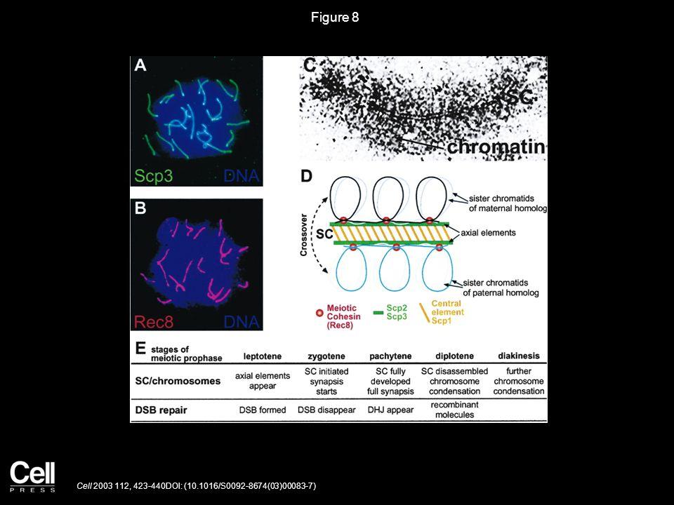 Figure 8 Cell 2003 112, 423-440DOI: (10.1016/S0092-8674(03)00083-7)
