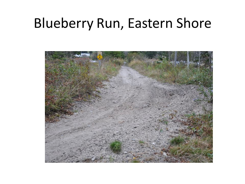 Blueberry Run, Eastern Shore
