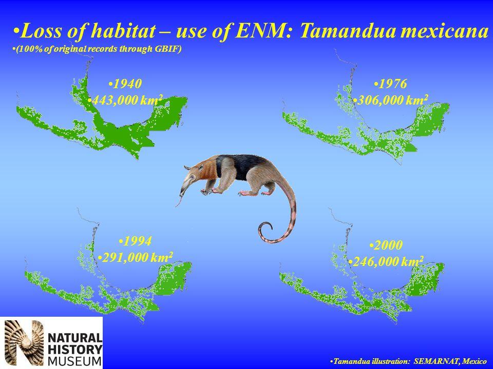 1940 443,000 km 2 1976 306,000 km 2 1994 291,000 km 2 2000 246,000 km 2 Loss of habitat – use of ENM: Tamandua mexicana (100% of original records through GBIF) Tamandua illustration: SEMARNAT, Mexico