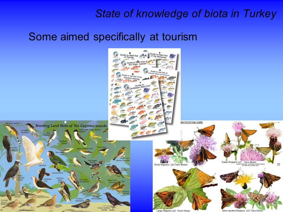 State of knowledge of biota in Turkey Some aimed specifically at tourism