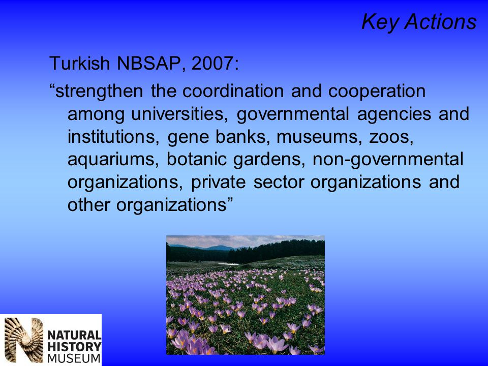 Key Actions Turkish NBSAP, 2007: strengthen the coordination and cooperation among universities, governmental agencies and institutions, gene banks, museums, zoos, aquariums, botanic gardens, non-governmental organizations, private sector organizations and other organizations