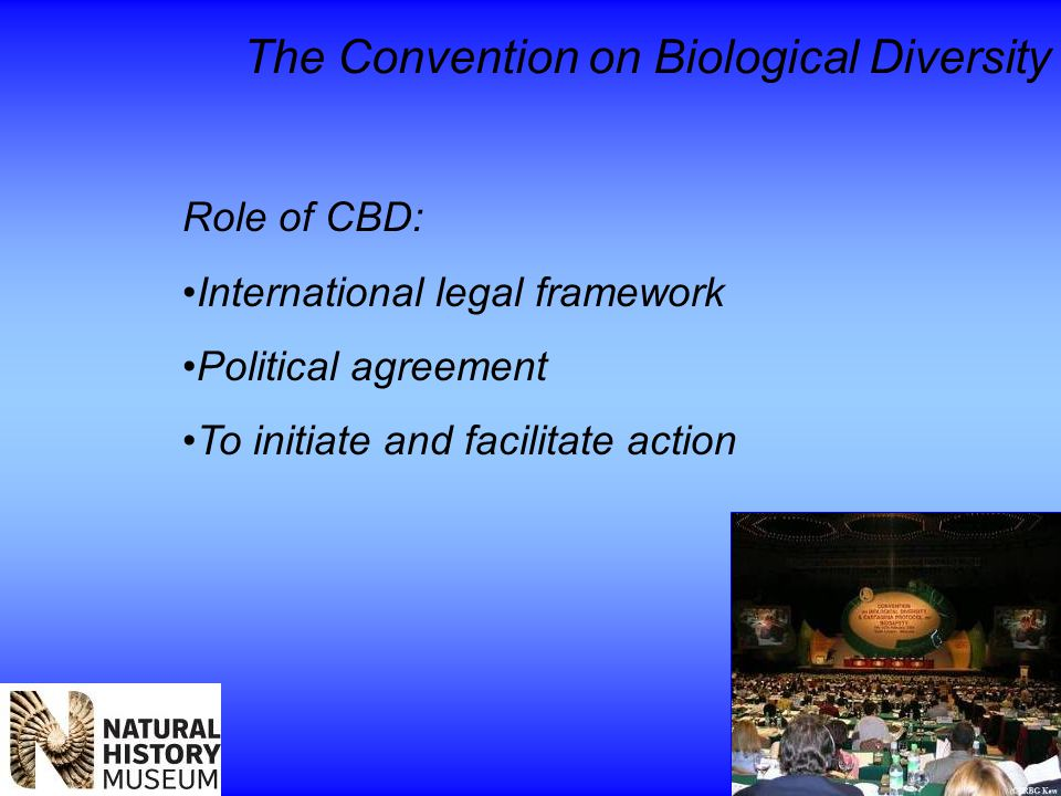 The Convention on Biological Diversity Role of CBD: International legal framework Political agreement To initiate and facilitate action