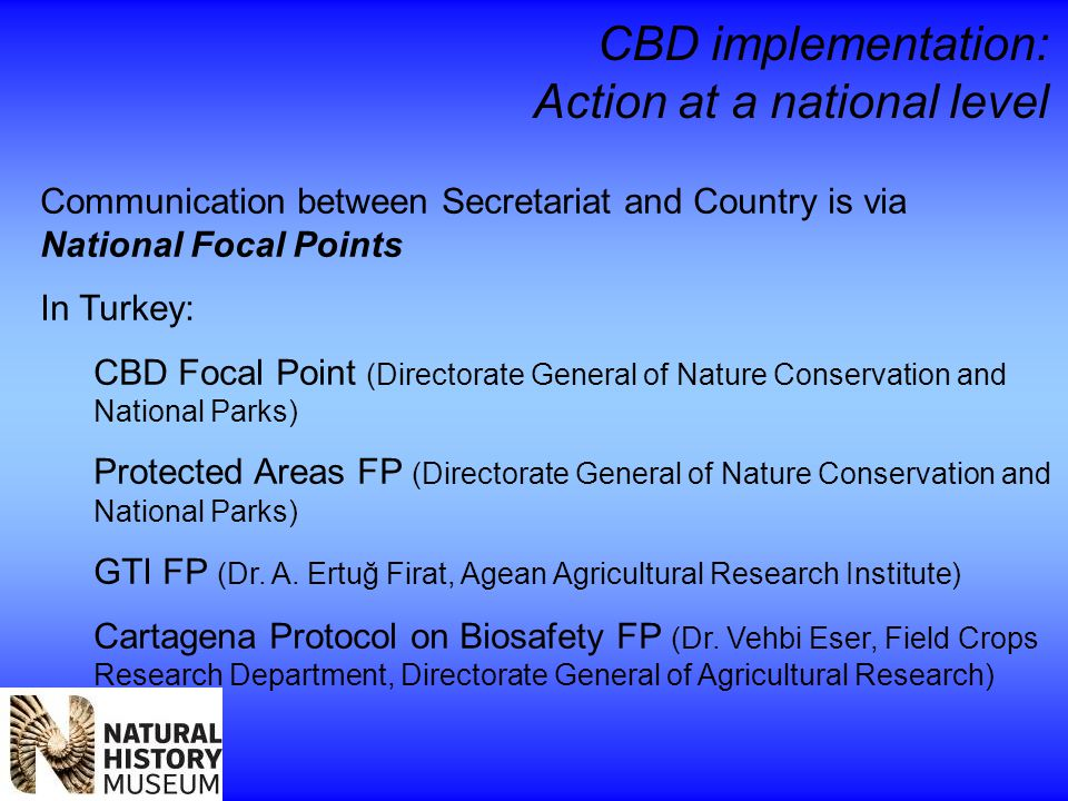 CBD implementation: Action at a national level Communication between Secretariat and Country is via National Focal Points In Turkey: CBD Focal Point (Directorate General of Nature Conservation and National Parks) Protected Areas FP (Directorate General of Nature Conservation and National Parks) GTI FP (Dr.