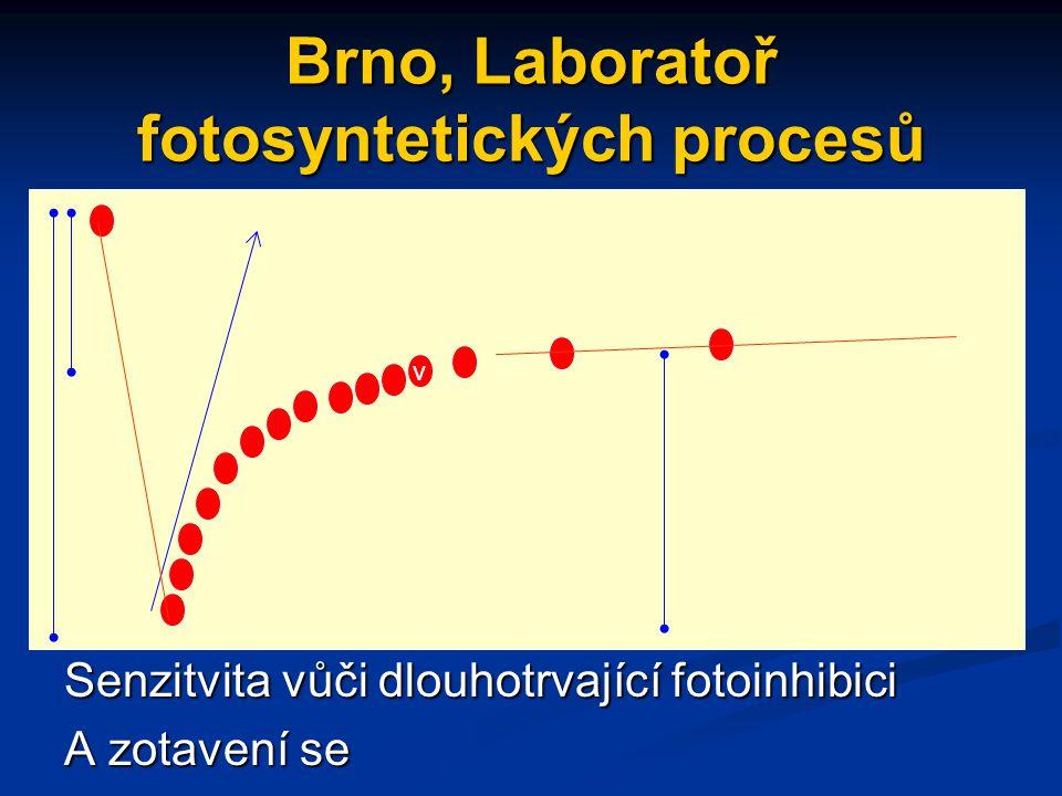 Brno, Laboratoř fotosyntetických procesů Senzitvita vůči dlouhotrvající fotoinhibici A zotavení se v