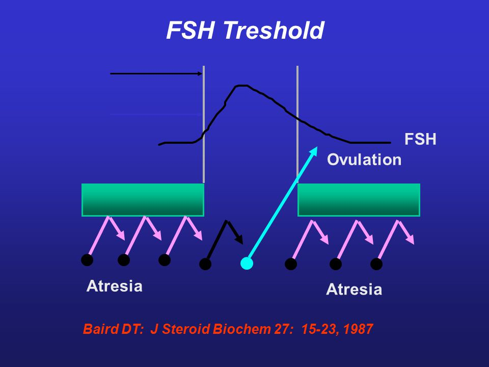 Ovulation Atresia FSH Baird DT: J Steroid Biochem 27: 15-23, 1987 FSH Treshold