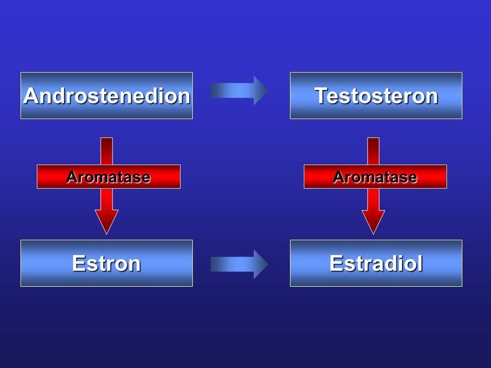 AndrostenedionTestosteron EstronEstradiol AromataseAromatase