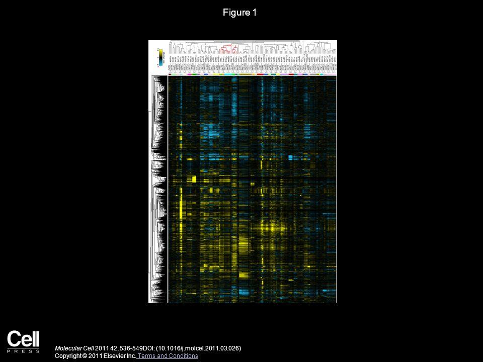 Figure 1 Molecular Cell 2011 42, 536-549DOI: (10.1016/j.molcel.2011.03.026) Copyright © 2011 Elsevier Inc.