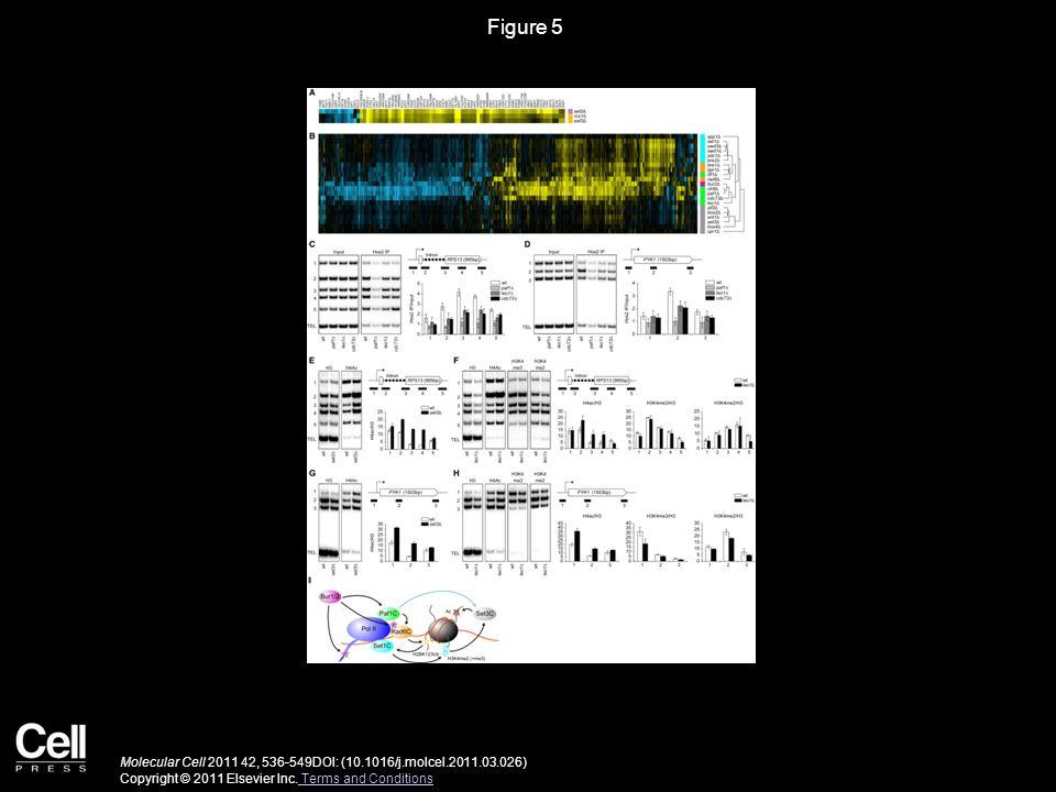 Figure 5 Molecular Cell 2011 42, 536-549DOI: (10.1016/j.molcel.2011.03.026) Copyright © 2011 Elsevier Inc.