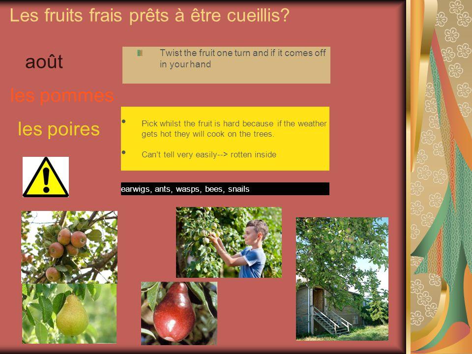 Les fruits frais prêts à être cueillis.