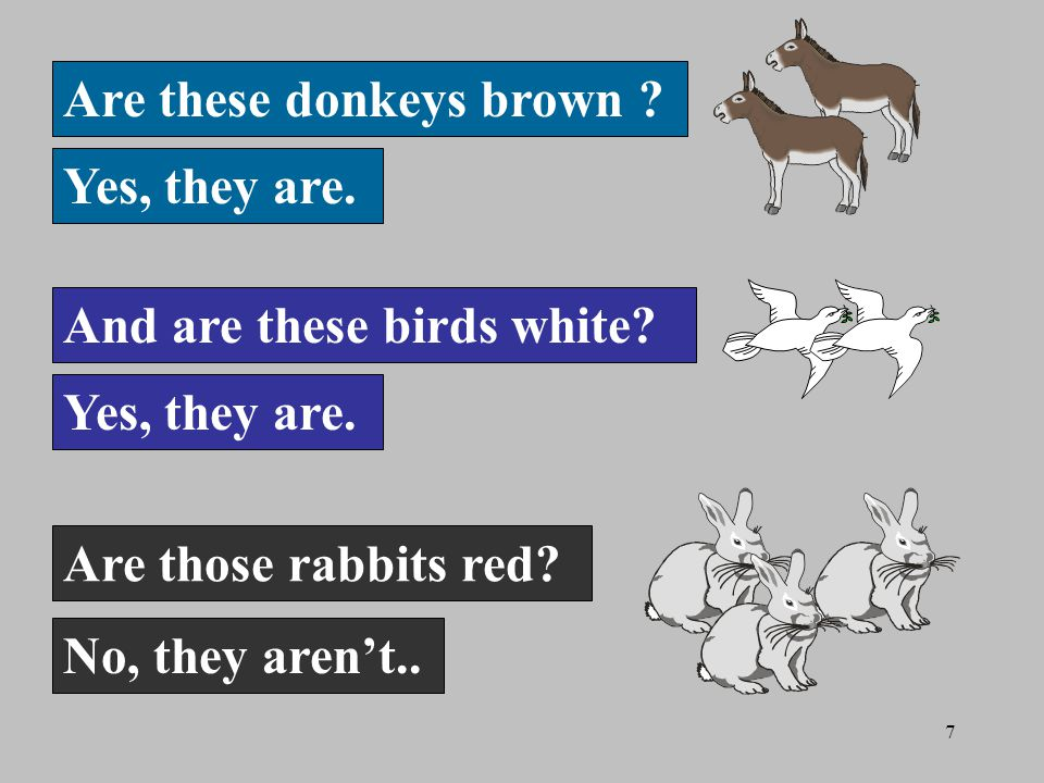 7 Are these donkeys brown . Yes, they are. And are these birds white.