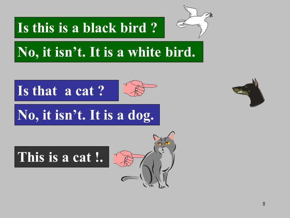 8 Is this is a black bird . No, it isn't. It is a white bird.