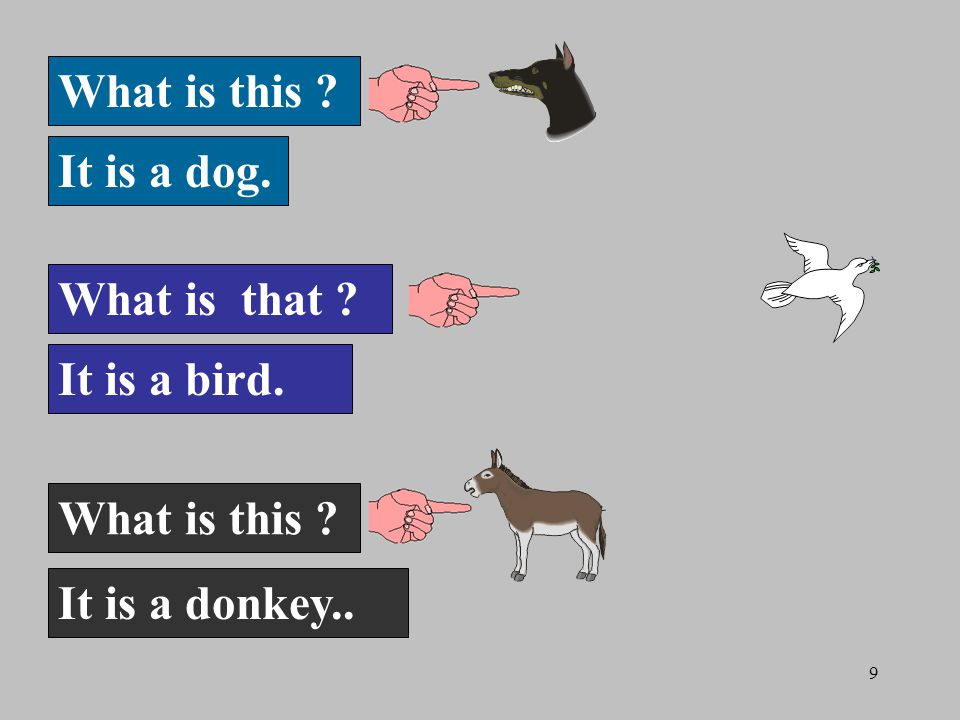 9 What is this It is a dog. What is that It is a bird. What is this It is a donkey..