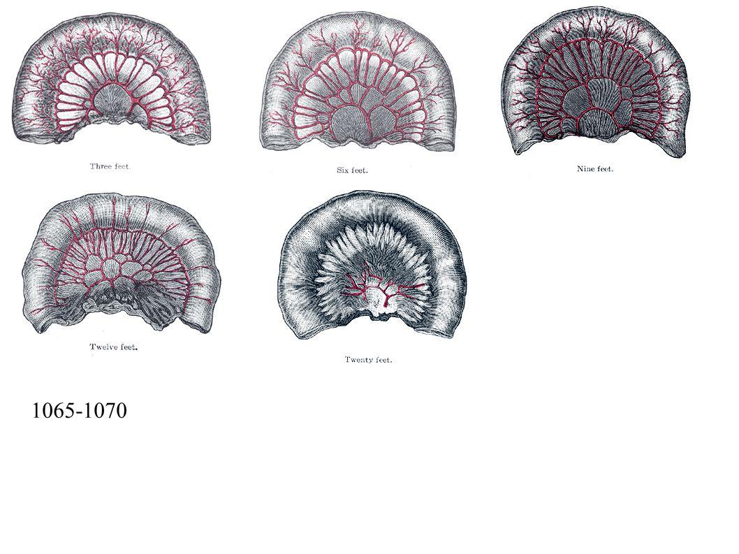 1065-1070