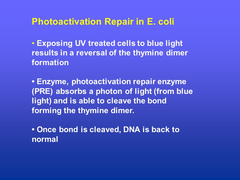 Photoactivation Repair in E.