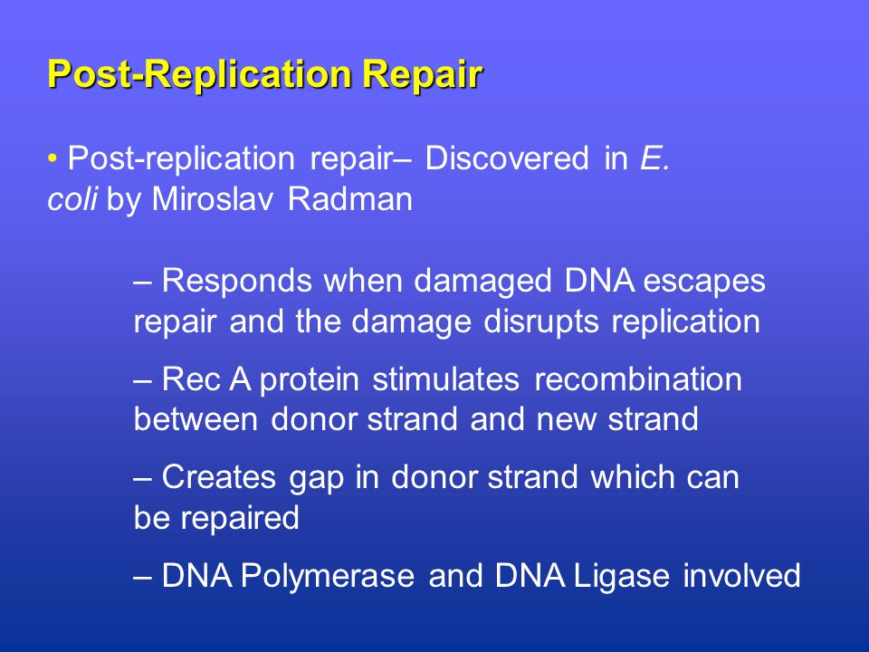 Post-Replication Repair Post-replication repair– Discovered in E.