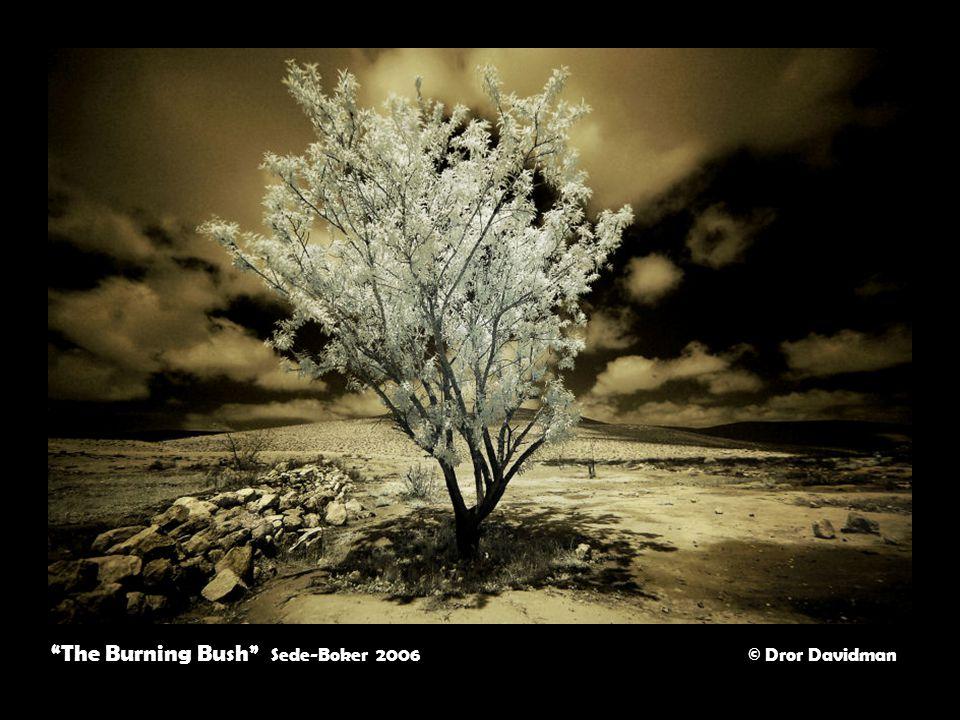 The Burning Bush Sede-Boker 2006 © Dror Davidman