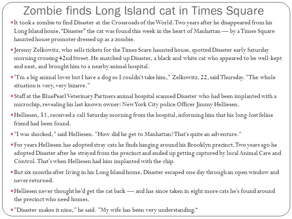 Zombie finds Long Island cat in Times Square It took a zombie to find Disaster at the Crossroads of the World.