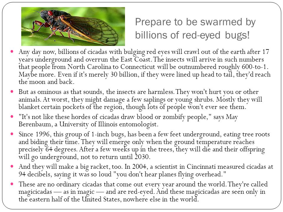 Prepare to be swarmed by billions of red-eyed bugs.