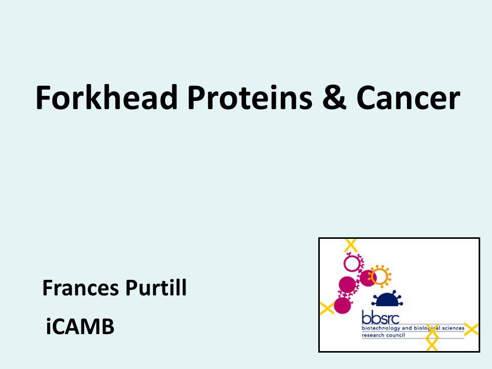 Forkhead Proteins & Cancer Frances Purtill iCAMB