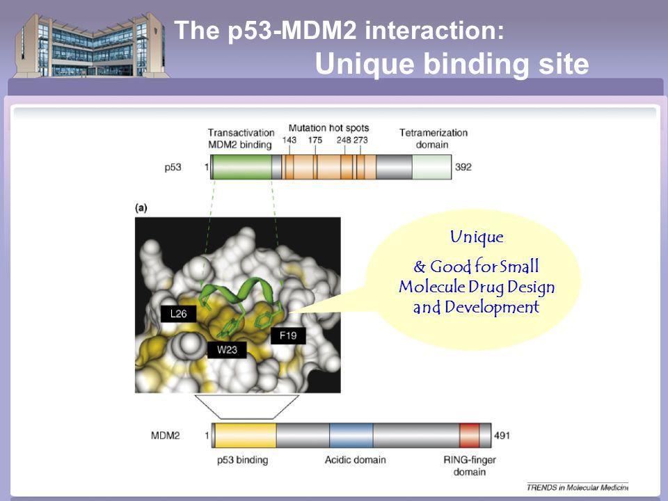 The p53-MDM2 interaction: Unique binding site Unique & Good for Small Molecule Drug Design and Development
