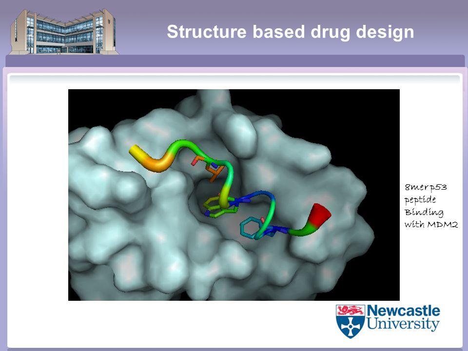 Structure based drug design 8mer p53 peptide Binding with MDM2