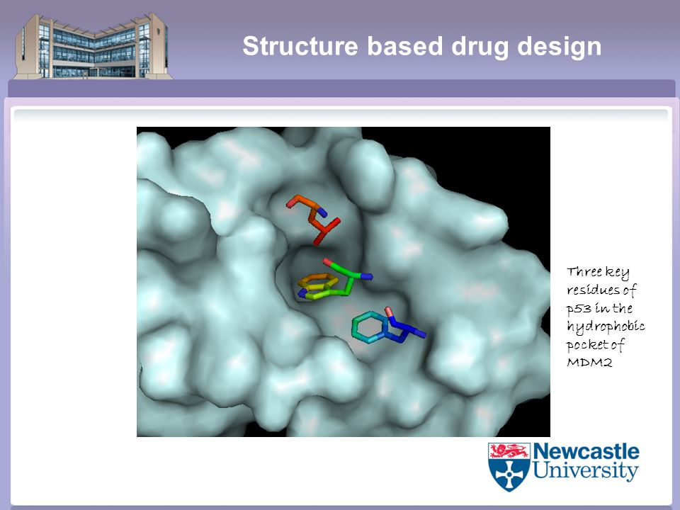 Structure based drug design Three key residues of p53 in the hydrophobic pocket of MDM2