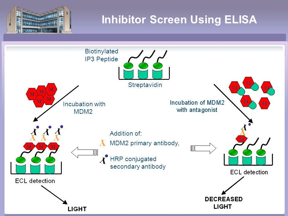 Inhibitor Screen Using ELISA Incubation with MDM2 M M M M M Y YY YYY Biotinylated IP3Peptide Streptavidin MMM Y HRP conjugated secondary antibody Y Addition of: MDM2 primary antibody,