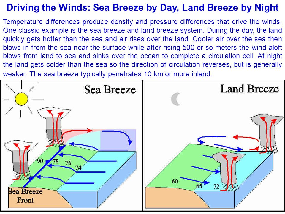 Driving the Winds: Sea Breeze by Day, Land Breeze by Night Temperature differences produce density and pressure differences that drive the winds. One