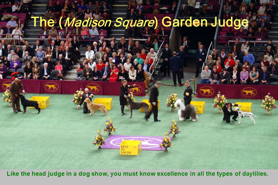 The ( Madison Square ) Garden Judge Like the head judge in a dog show, you must know excellence in all the types of daylilies.