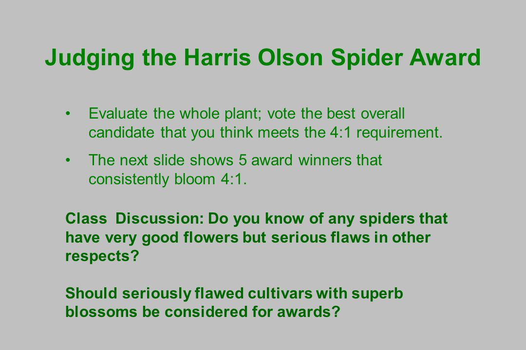 Judging the Harris Olson Spider Award Evaluate the whole plant; vote the best overall candidate that you think meets the 4:1 requirement.