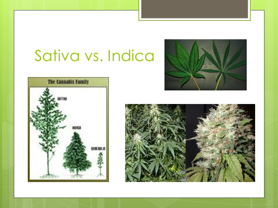 Marijuana vs.