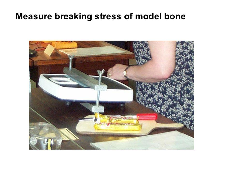 Measure breaking stress of model bone