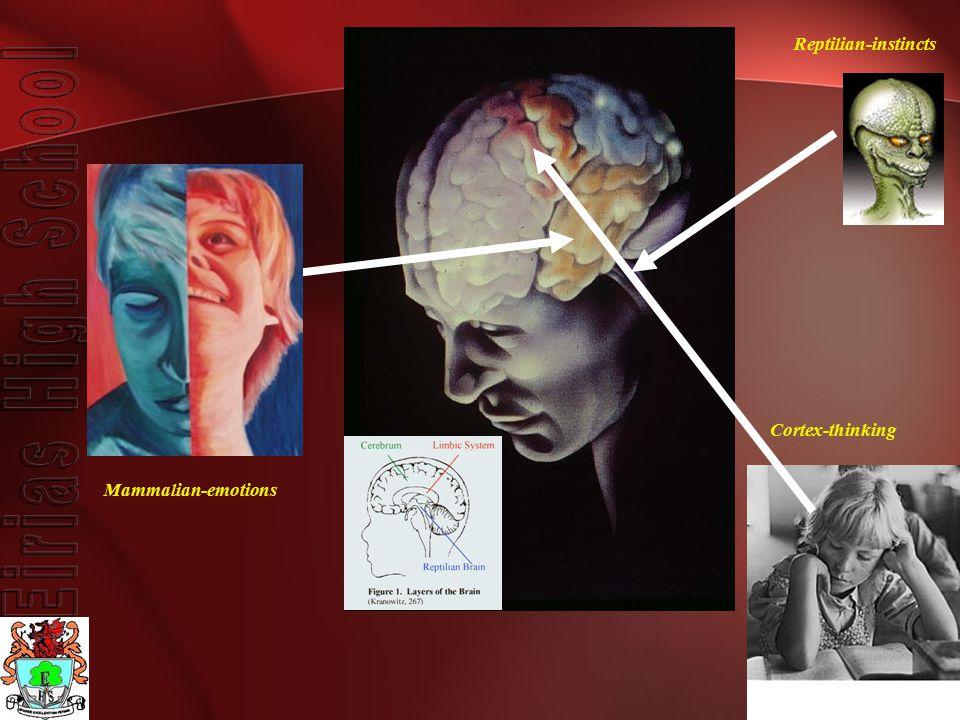 Reptilian-instincts Mammalian-emotions Cortex-thinking