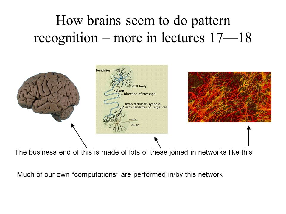 How brains seem to do pattern recognition – more in lectures 17—18 The business end of this is made of lots of these joined in networks like this Much of our own computations are performed in/by this network