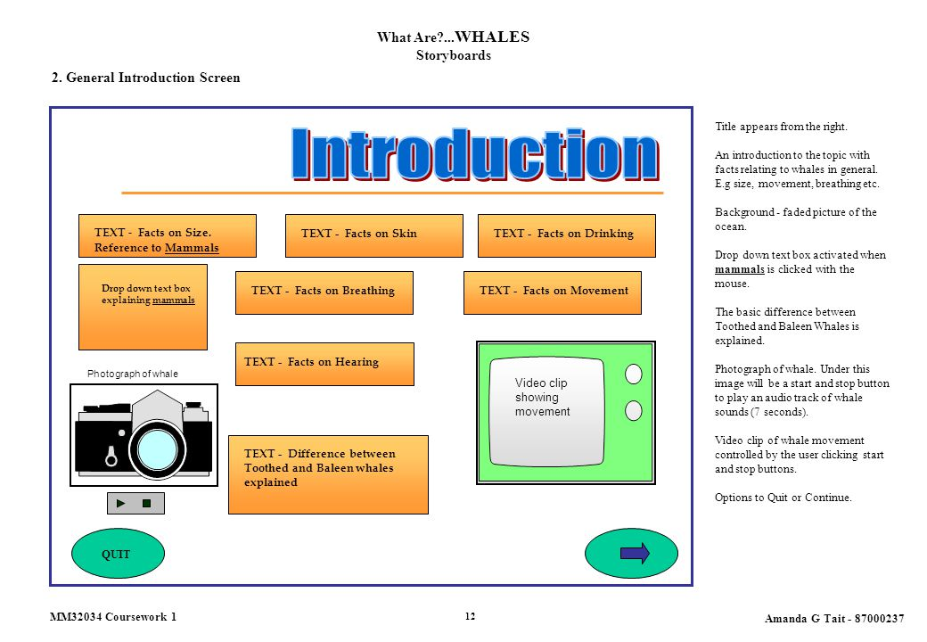 What Are?... WHALES Storyboards 2. General Introduction Screen Title appears from the right.