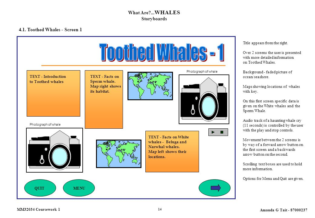 4.1. Toothed Whales - Screen 1 What Are?... WHALES Storyboards Title appears from the right. Over 2 screens the user is presented with more detailed i