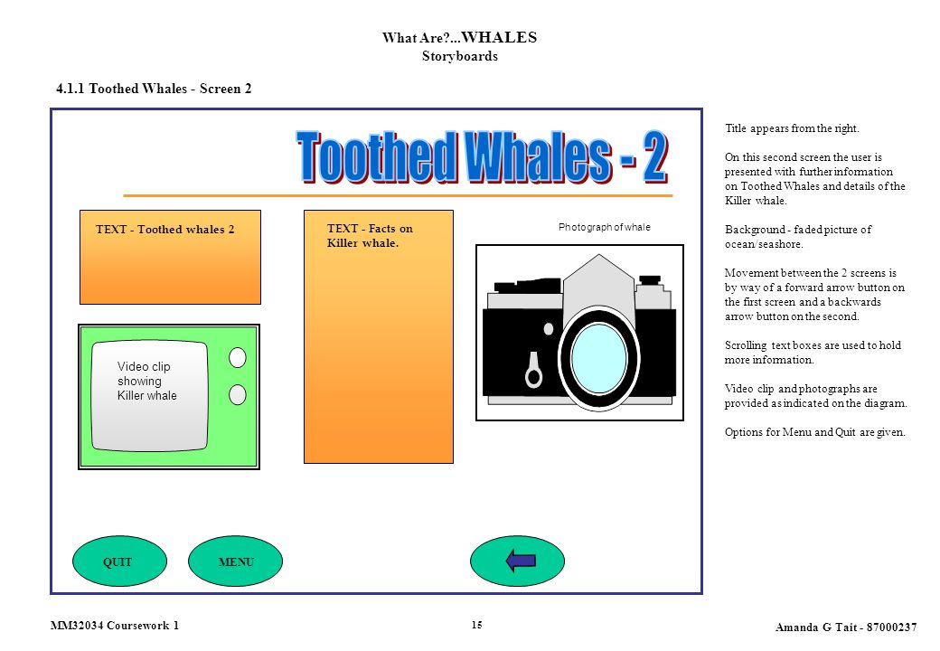 4.1.1 Toothed Whales - Screen 2 What Are?... WHALES Storyboards Title appears from the right. On this second screen the user is presented with further